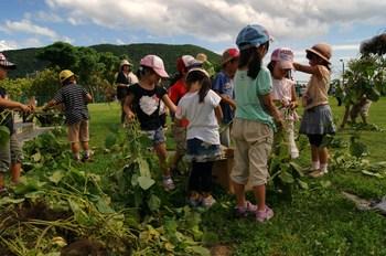2012.9.12枝豆収穫2.jpg