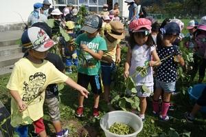 2016.9.2枝豆収穫8.jpg